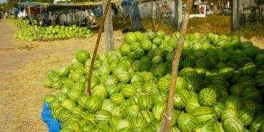 Arbuzu tirgus Thakheka