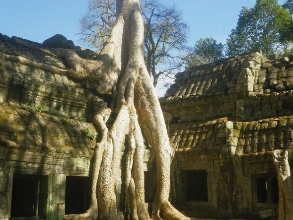 Koku apaugušais Ankoras templis