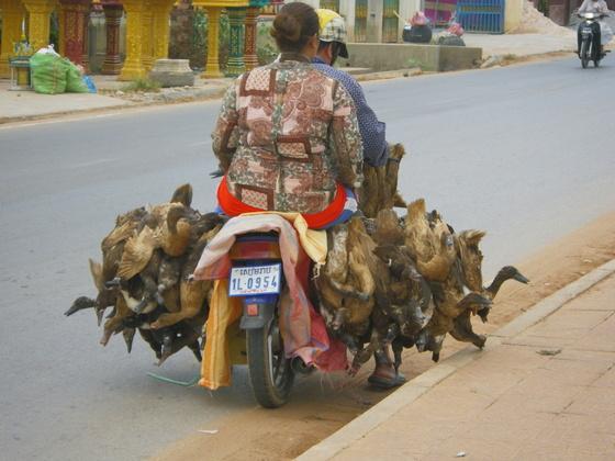 piles uz motocikla