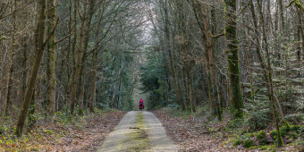 Cycling-through-the-forest-in-France-preset