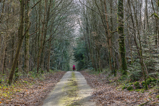Cycling-through-the-forest-in-France