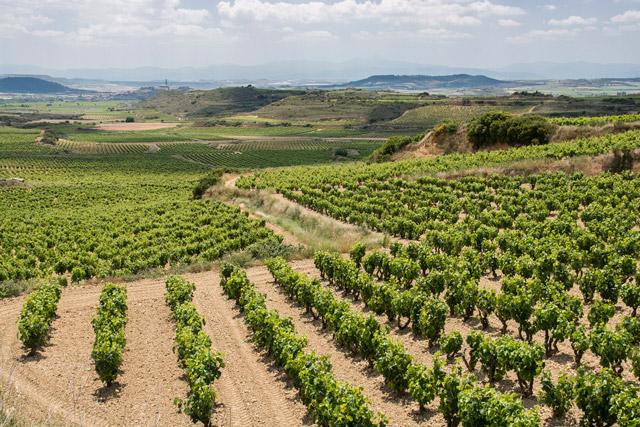 La-Rioja-vina-regions-Spanija